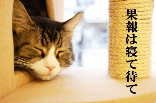 http://blogimg.goo.ne.jp/user_image/5c/9f/e57f237deb920da62819611b442628a2.jpg