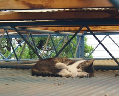 屋根の上で寝る猫