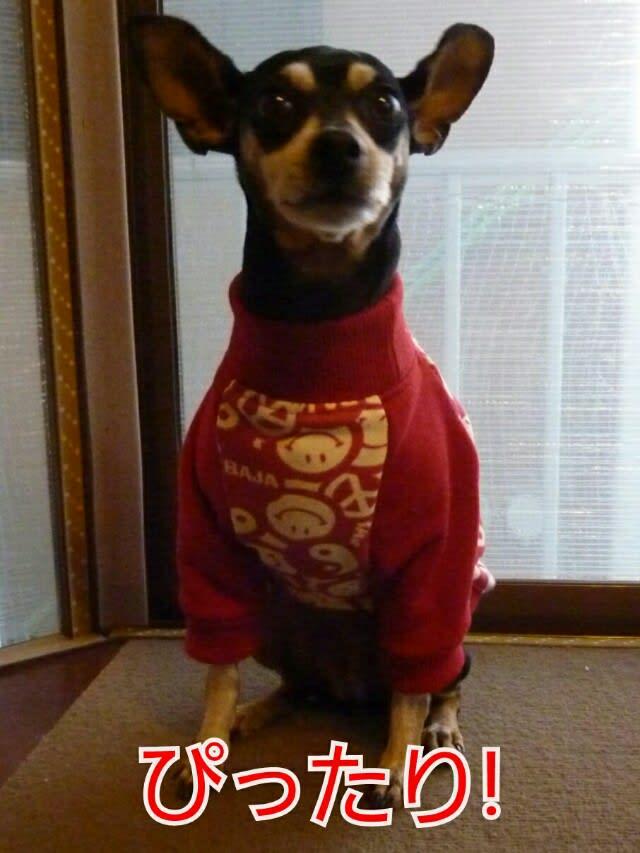 自分でつくれるいぬの服 小型犬 ... - オムニ7