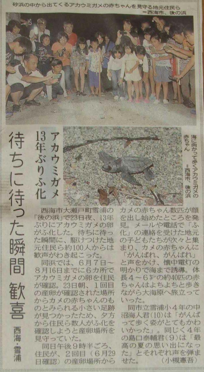 雪浦 アカウミガメ 13年目のふ化 ー長崎新聞ー