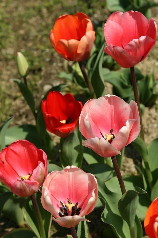 家の周りの花々