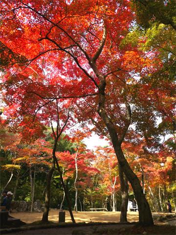公園中央部の紅葉