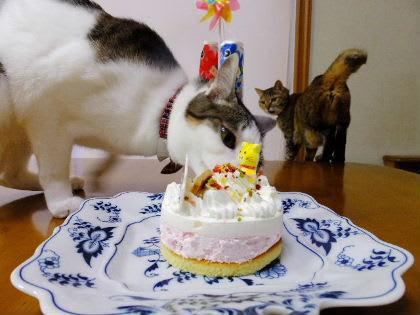 みうとたんのバースデーケーキ