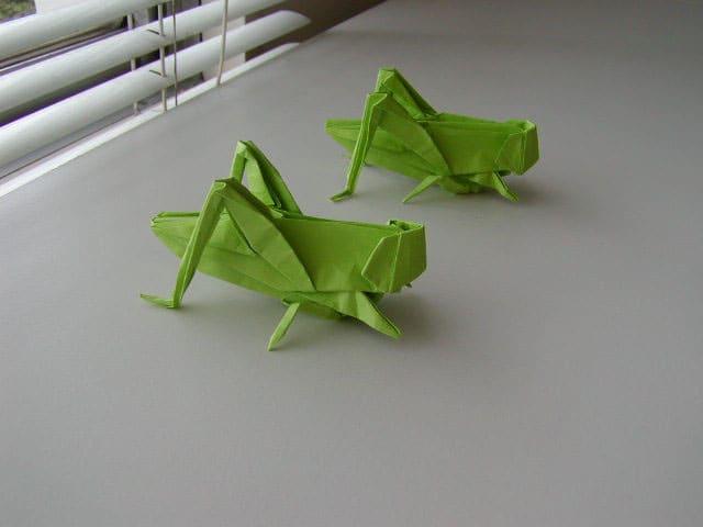 すべての折り紙 手紙の折り方 簡単 : バッタ折り紙できました - GUTS ...