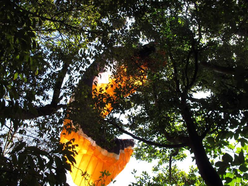 Treelanding_2