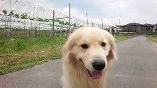 お気に入りのお散歩コースで満面の笑顔です