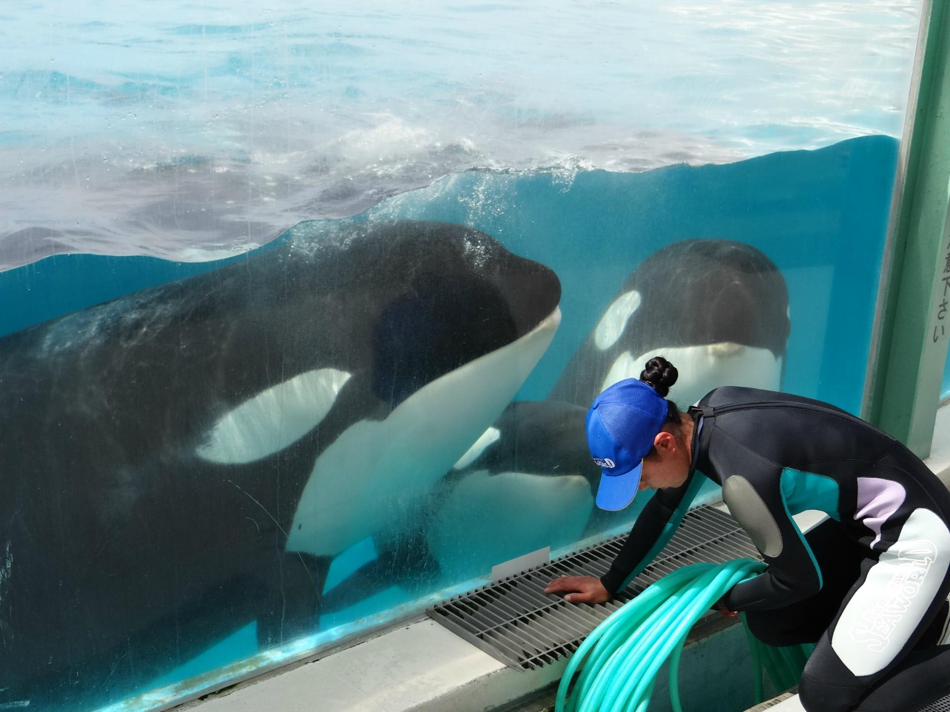みんなトレーナーさん大好きなんだね(笑)よく「水族館にいるイルカは無理やりショーをやってるんだ!」って人もいますが、どこの水族館にいっても、イルカから
