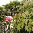2006-5-25-13 思い出の初薔薇(名なし)