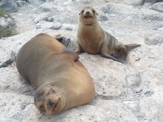 続 ガラパゴス諸島で見た動物虐...