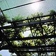 2011-5-20-9 ツル性植物
