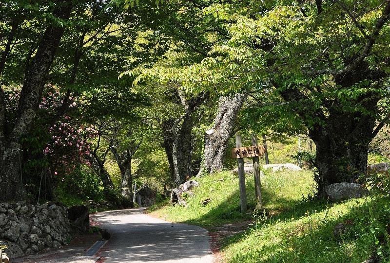 三多気の桜夜桜公園