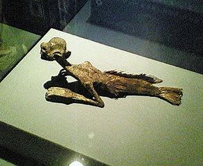 人魚のミイラ 原野農芸博物館所蔵。創設者、原野喜一郎氏による収集品らし... 化け物のミイラ