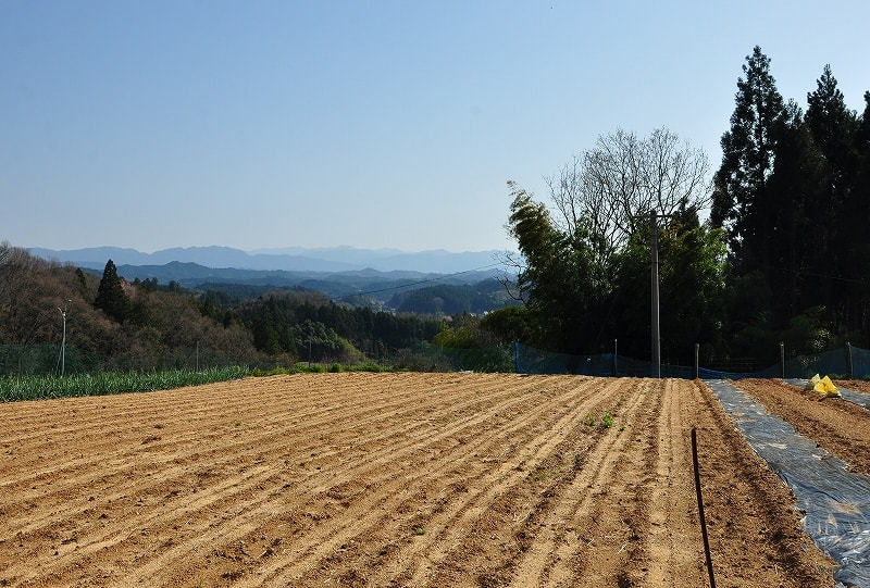 2号墳上の畑地