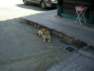 隋身門のそばで休んでいた老犬