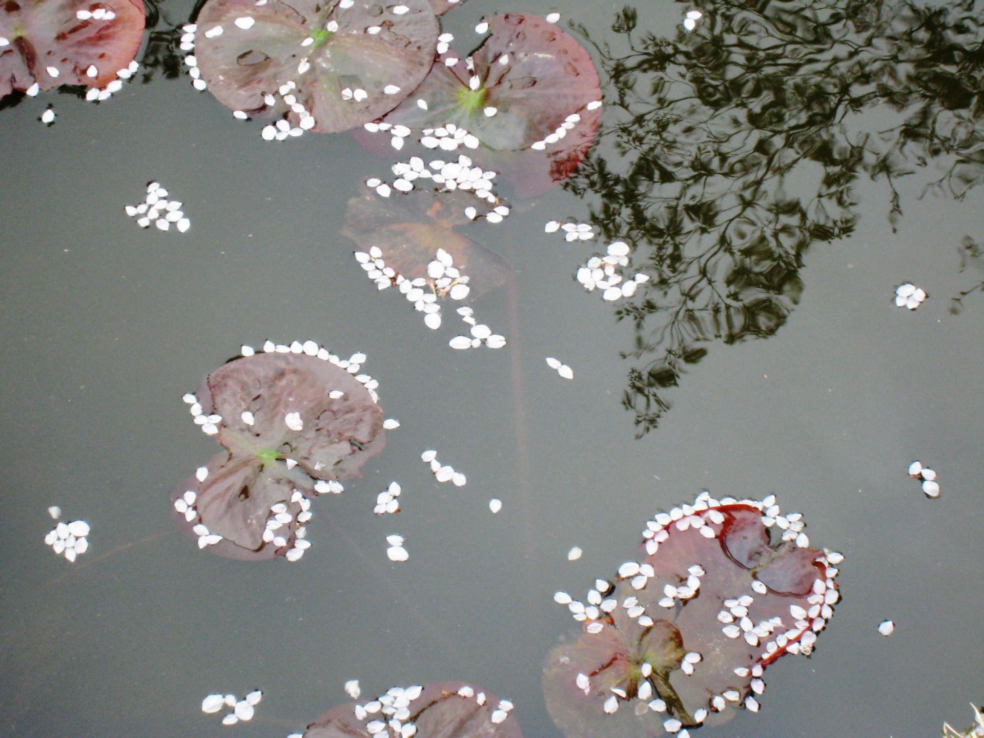 菅野完著『日本会議の研究』 - 土塊も襤褸も空へ昇り行く:北村虻曳