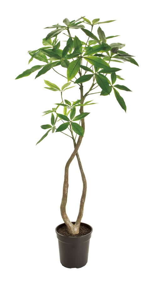 パキラ 造花 フェイクグリーン 人工観葉植物 画像