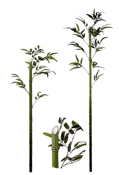 竹の画像 p1_9