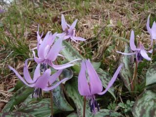 奥大山花の観察会
