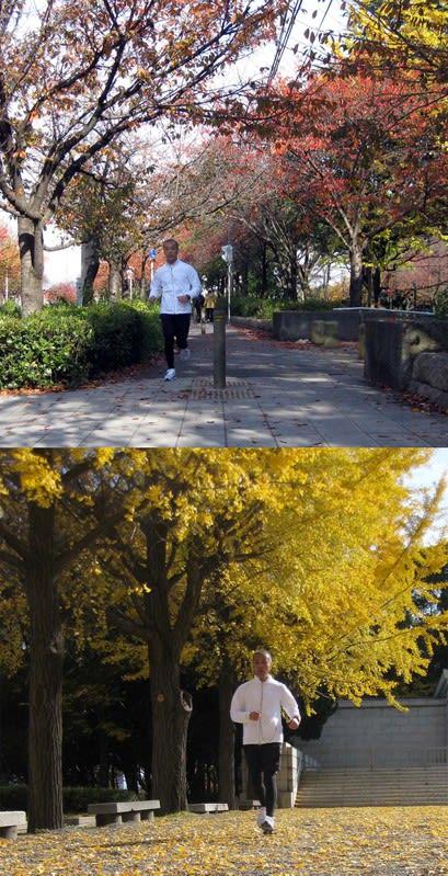 Running_along_a_row_of_autumn_tre_3