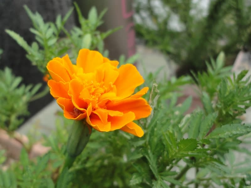 08月27日 オレンジの花