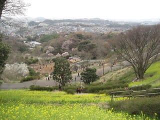 金沢自然公園 動物園でお花見