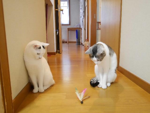 休ブちょっとタンマ<写真の消化でコンコン羽で遊ぶフタリ>