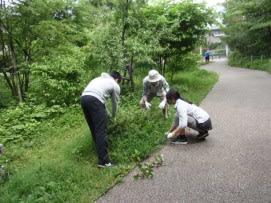 低木の周りの草取り_R.JPG