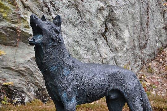ニホンオオカミの画像 p1_34
