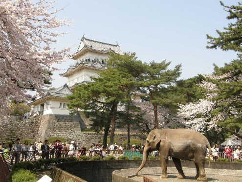 小田原城と象のウメ子