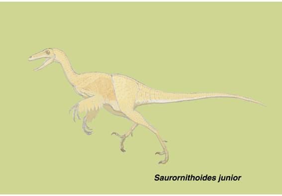 サウロルニトイデス1 - 肉食の系...
