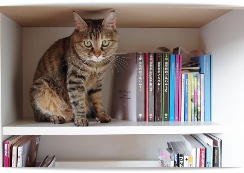 猫本棚に整理しました~猫の本棚~ - skcho18.net