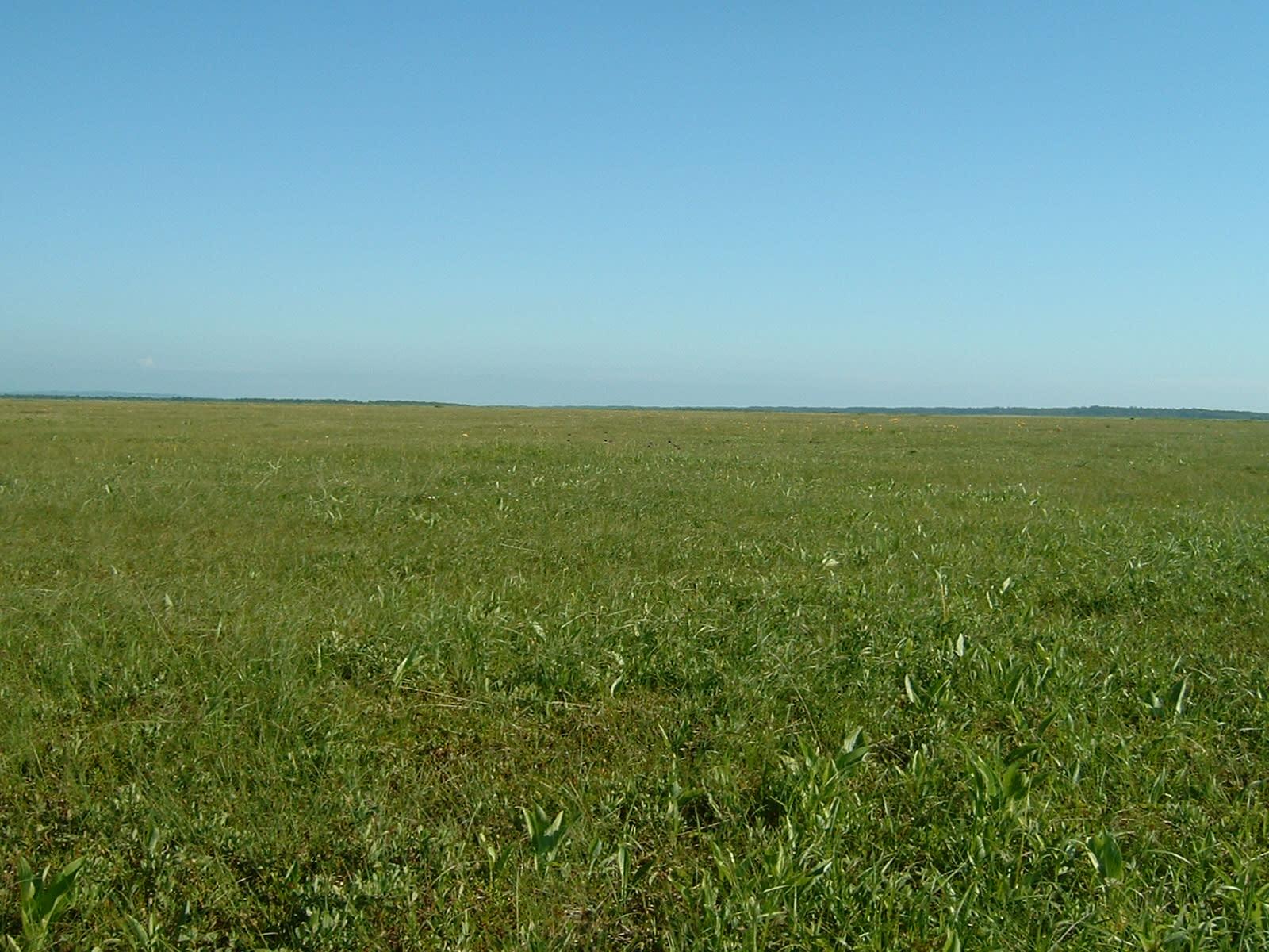 サロベツ原野に行きました-花と...