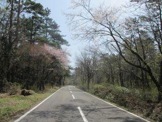 植樹祭道路下付近