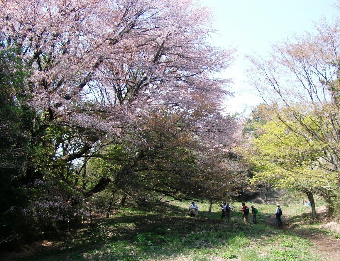 春たけなわの箱根:浅間山・鷹取山縦走 - 中高年の山旅三昧(その2)