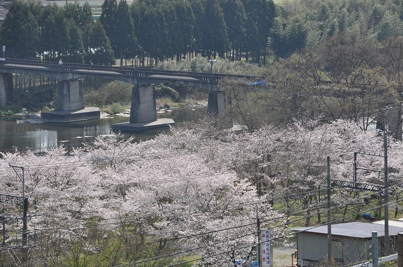 椿橋と桜の公園