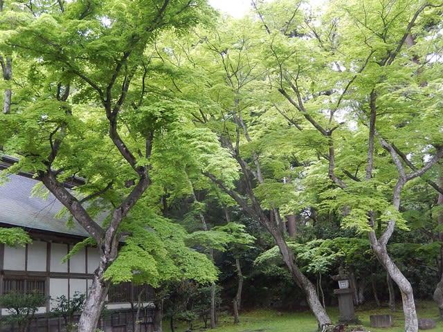フジ (植物)の画像 p1_36