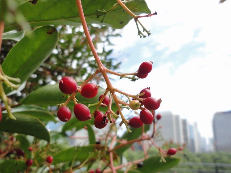 09月26日 展望台の赤い実