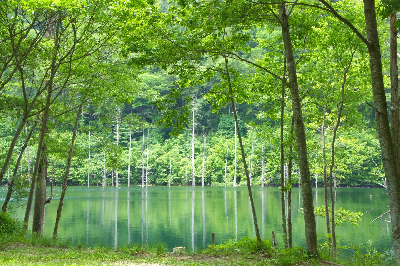 「自然」の画像検索結果