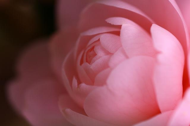 ・金沢から発信のブログ 風景と花と鳥など