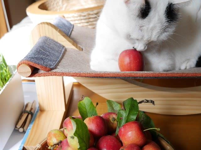休ブちょっとタンマ<りんごの収穫祭>