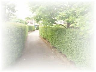 近くでもこんなに素晴らしい散歩道が有るのです、クリックで葉の答えが出ます