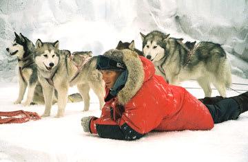 南極物語の画像 p1_5