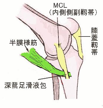 膝痛 - 現代医学的鍼灸治療 ブログ ログイン ランダム 御巣鷹滑落死「慰霊の場」に衝撃 記事を
