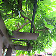 2011-7-1-16 ツル性植物