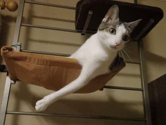 猫が箱乗り【動画】