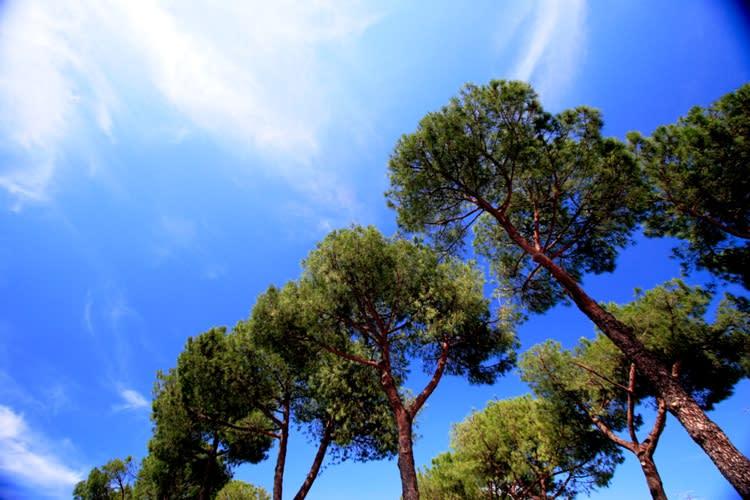イタリア・ピストイア - La Luce ブログ ログイン ランダム 今日は筆が進まない・・・。