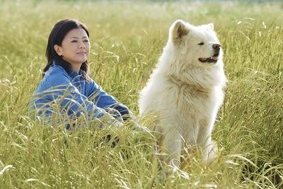 秋田のブサカワ犬「わさお」に異変か? - 宇宙のこっくり亭