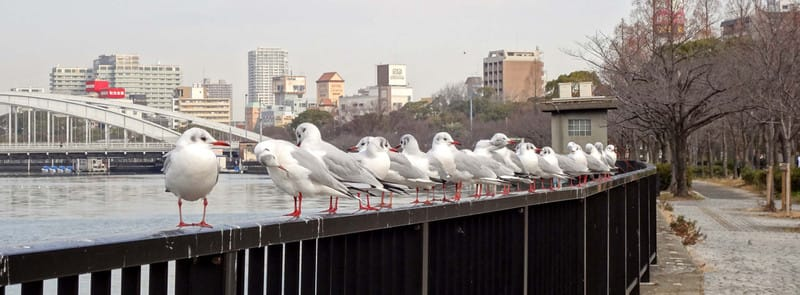 Seagulls_in_line