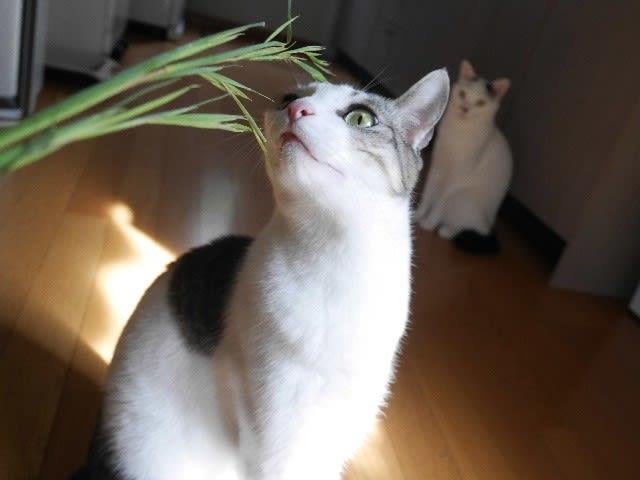猫は草でコワイお顔になる