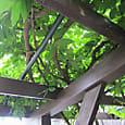 2011-7-1-18 ツル性植物